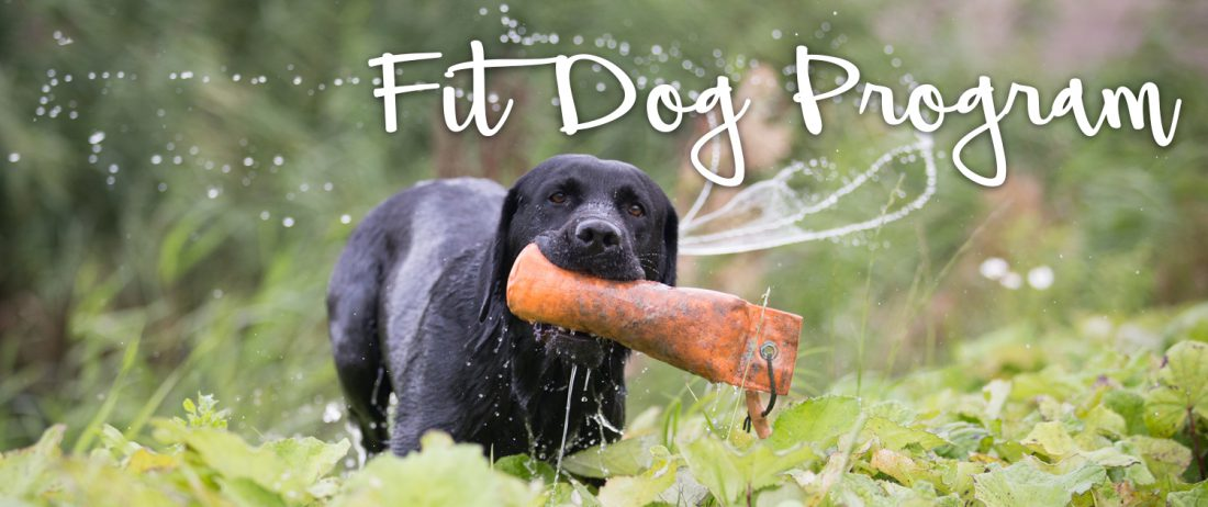 Banner-FIT-DOG-PROGRAM-Dierfysio-Eemnes